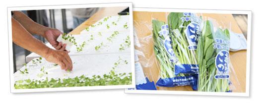 MODSグリーンファーム作物について