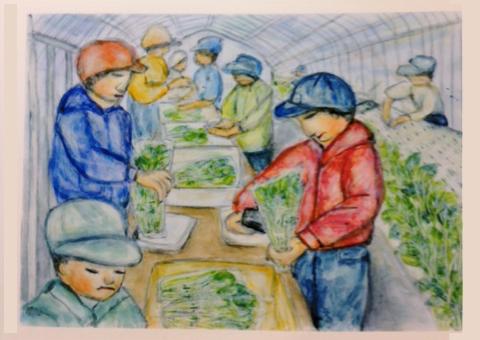 水耕栽培に挑戦
