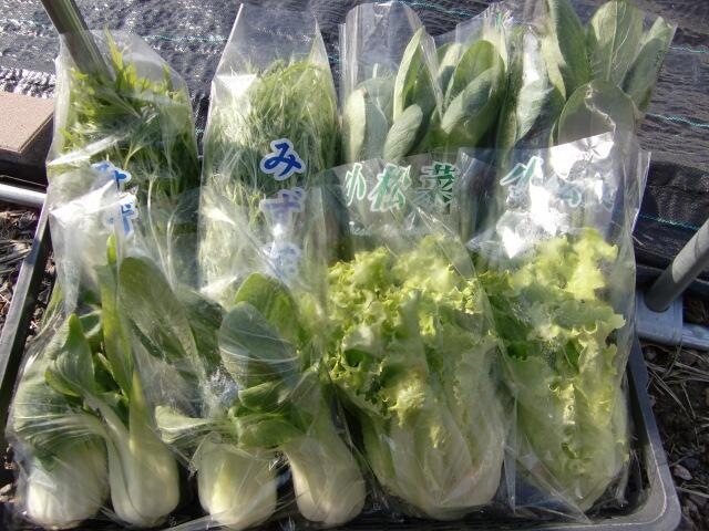 新鮮な朝どれ野菜、岩倉事務所にて販売